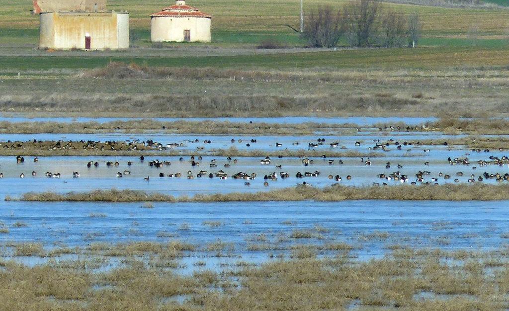 patos lagunas reserva natural