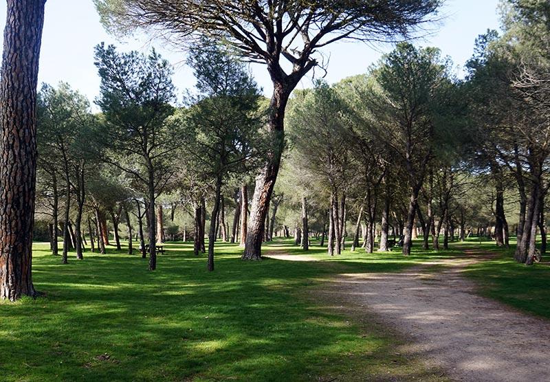 bosque de valorio